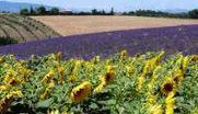 Feriebolig Provence - lækre feriehuse og ferielejligheder